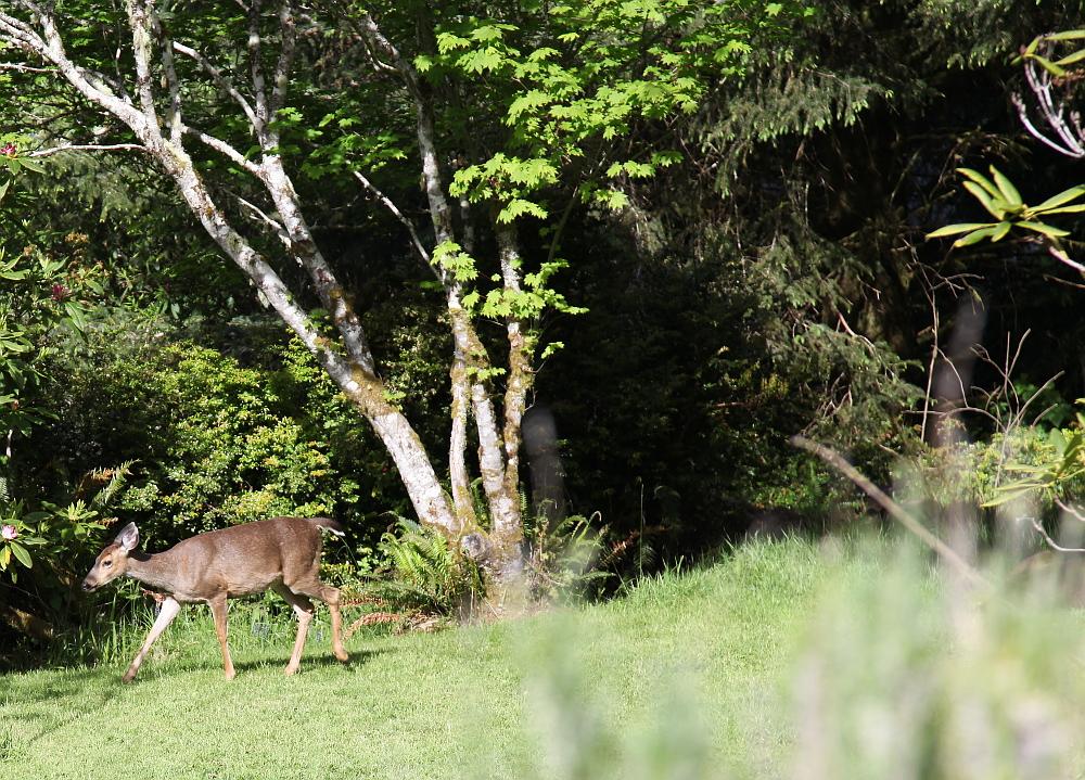 deer_0