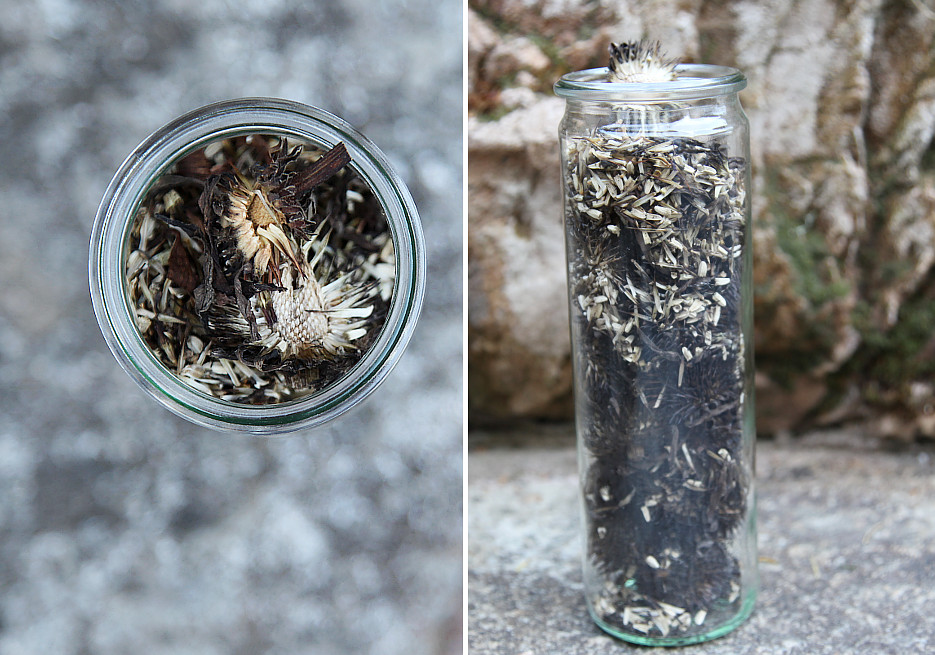 echinacea_seed