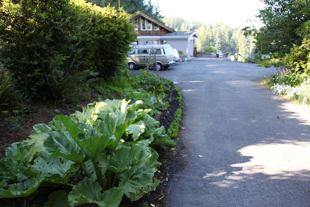driveway_garden