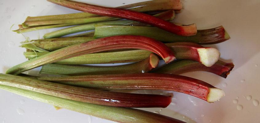 a rhubarb galette
