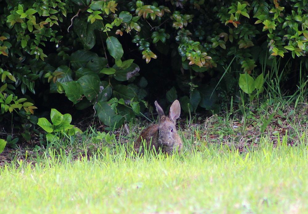 bunny_may8
